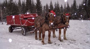 Take A Sleigh Ride Through An Idyllic Christmas Tree Farm At Forever Green Tree Farm In Idaho