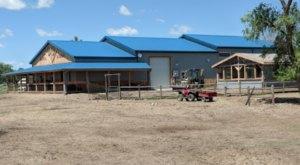 Caputa Alpaca Farm In South Dakota Makes For A Fun Family Day Trip