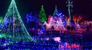 Even The Grinch Would Marvel At Gardens Aglow At The Coastal Maine Botanical Gardens