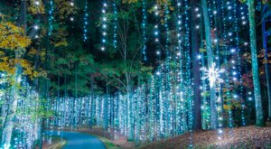 Watch Callaway Gardens Light Up With 8 Million Lights At The Winter Wonderland Festival In Georgia