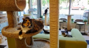 The Cafe Meow Is A Completely Cat-Themed Catopia Of A Cafe In Minnesota