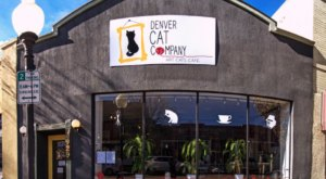 The Denver Cat Company Is A Completely Cat-Themed Catopia Of A Cafe In Colorado