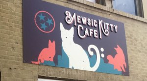 The Mewsic Kitty Cafe In Nashville Is The Perfect Coffee Shop For All The Cat And Animal Lovers Out There