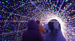 Over 100,000 Lights Illuminate New York's Animal Adventure Park During The Jungle Bells Event