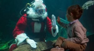 Take A Magical Underwater Journey With Scuba Santa At The Tennessee Aquarium