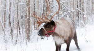 Wake Up Surrounded By Reindeer When You Stay At Alaska's Reindeer Haus