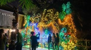 Zoo Lights In Texas Has An Adults-Only Night This Holiday Season With Wine And Beer
