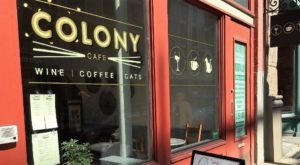 Colony Cafe Is A Completely Cat-Themed Catopia Of A Cafe In Pittsburgh