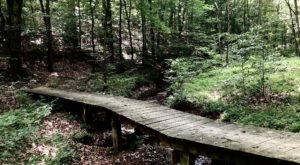 The 11-Mile Zaleski South Loop Trail In Ohio Takes You Through The Enchanting Zaleski State Forest