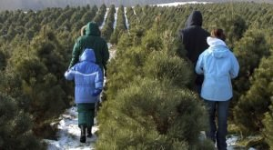 This Christmas Tree Farm Near Cleveland Has Delighted Visitors For Nearly 200 Years