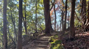 Hike This Stairway To Nowhere In South Carolina For A Magical Woodland Adventure