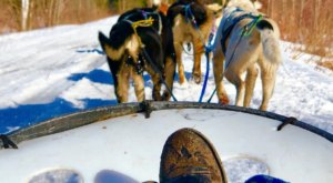 Take A Sled Dog Adventure At  Muddy Paw Sled Dog Kennel In New Hampshire For A Ride Of A Lifetime