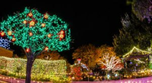 Walk Through Over 300,000 Christmas Lights At The Amarillo Botanical Gardens In Texas
