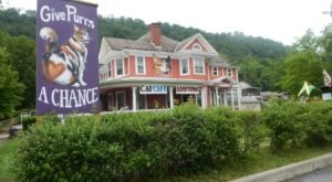 Give Purrs A Chance Is A Completely Cat-Themed Catopia Of A Cafe In West Virginia