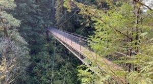 Walk Across A 240-Foot Suspension Bridge On The Drift Creek Falls Trail In Oregon