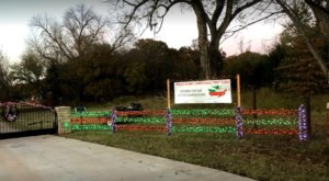 Everything About Wells Family Christmas Tree Farm In Oklahoma Will Get You In The Holiday Spirit