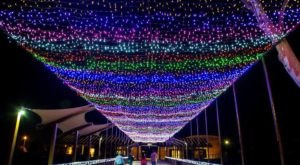 Walk Through Millions Of Holiday Lights At ZooLights In Arizona