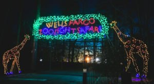Watch Birmingham Zoo Light Up With A Million Lights At ZooLight Safari In Alabama