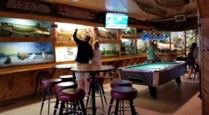 Drink With Yodeling Chipmunks, Boxing Raccoons, And More At Wisconsin's Moccasin Bar