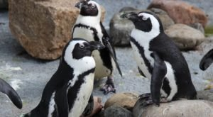 Enjoy A Perfectly Precious Pancake Breakfast With Penguins At The Henry Doorly Zoo In Nebraska