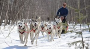 Wolfsong Adventures In Wisconsin Offers Thrilling Dog Sledding Trips For All Ages