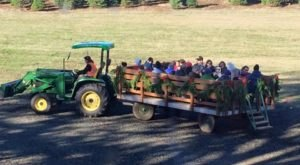 Take A Wagon Ride Through An Idyllic Christmas Tree Farm At Redland Family Farm In Oregon