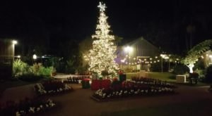 The Garden Christmas Light Displays At Sherman Library and Gardens In Southern California Is Pure Holiday Magic
