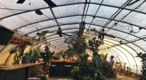 Sip Drinks Inside A Greenhouse-Turned-Bar At The Greenhouse Bar In Tennessee This Winter