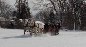 Embark On An Enchanting Horse-Drawn Carriage Ride At Allegra Farm In Connecticut