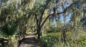 The Palmetto Trail Near New Orleans Takes You Through An Enchanting Swamp