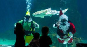 Watch Santa Dive With Sharks At Festival Of The Seas In Utah's Loveland Living Planet Aquarium