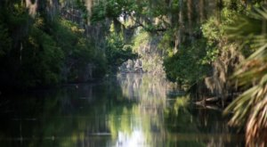 Explore 20,000 Acres Of Cypress Swamp With Adventures Of Jean Lafitte Tours Near New Orleans