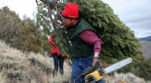 You Can Cut Your Own Christmas Tree From One Of Millions In Wyoming's National Forests