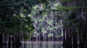 The World's Largest Cypress Forest Is Located Right Here In Small-Town Texas
