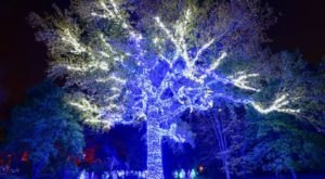 The Garden Christmas Light Displays At Missouri Botanical Garden In Missouri Is Pure Holiday Magic