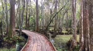 7 Easy Hikes Within An Hour Of New Orleans To Take On This Winter