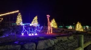 Even The Grinch Would Marvel At The Holiday Lights At Keystone Safari Near Pittsburgh