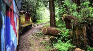 Hop Aboard The Pudding Creek Express For Beautiful Views Of The Northern California Redwoods