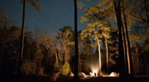 Embark On A Real Live Bigfoot Hunting Adventure Right Here In Florida