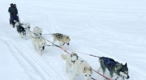 Take A Sled Dog Adventure With Sierra Adventures In Nevada For A Ride Of A Lifetime