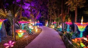 Luminosa Jungle Island In Florida Is The Holiday-Themed Light Up Event To See Up Close