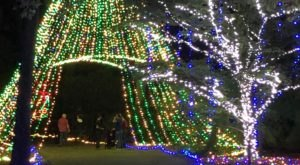 The Garden Christmas Light Displays At Norfolk Botanical Garden In Virginia Is Pure Holiday Magic