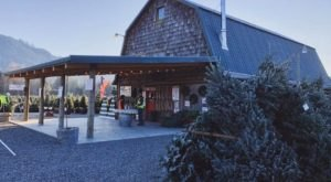 A Trip To Alpine Meadows Christmas Tree Farm In Washington Makes A Great Family Outing
