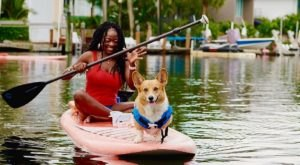 Go Paddleboarding With Adorable Corgis At Sup Pup Paddleboard In Fort Lauderdale