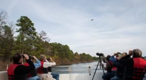 Take A Lake Cruise To See Arkansas' Majestic Eagles This Winter