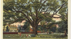 A Piece Of New Jersey's Most Iconic Tree, The Salem Oak, Is Coming To Your Town