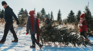 2019 Has Been Deemed The Most Expensive Year For Purchasing Christmas Trees