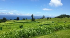 The Farmers' Market At Hamakua Harvest Is One Of Hawaii's Best Agricultural Destinations