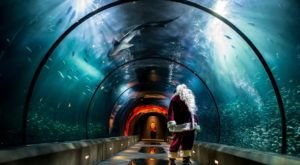 Take A Magical Underwater Journey With Thousands Of Glittering Lights At Oregon Coast Aquarium