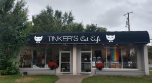 Tinker's Cat Cafe Is A Completely Cat-Themed Catopia Of A Cafe In Utah
